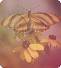 Past Life Regression Butterfly